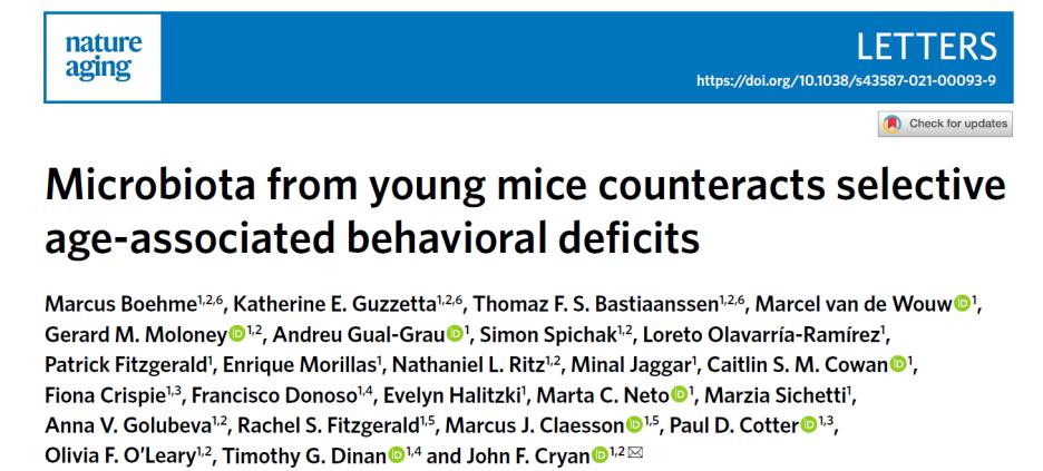 腸道菌群和大腦的奇妙關聯又雙叒叕增加了