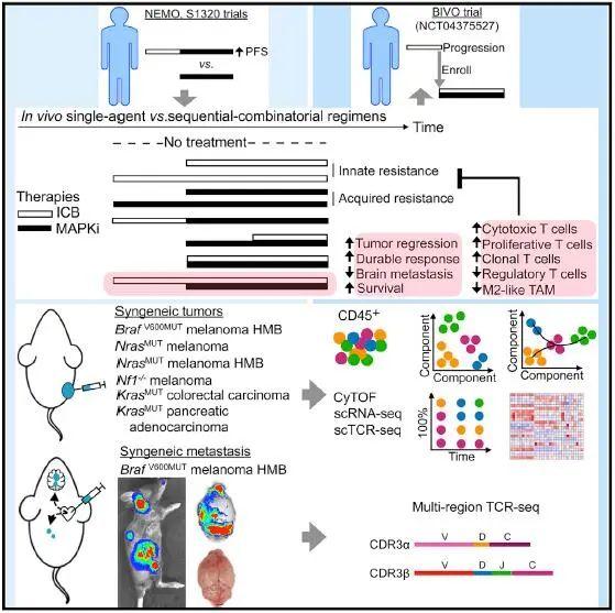 Cancer Cell丨打破傳統,聯合用藥中抗PD-1/L1的妙用